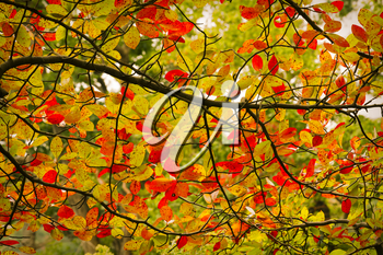 Colorful fall scenery.