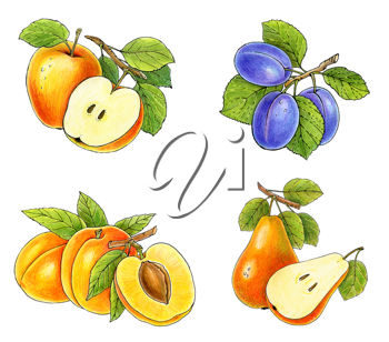 Royalty Free Clipart Image of a Fruit Collection