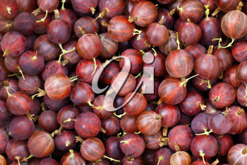Red gooseberry close-up background
