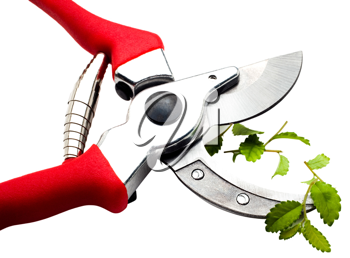 Close-up of a pruning shears pruning a plant isolated over white