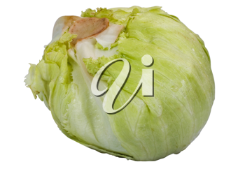 Close-up of a cabbage