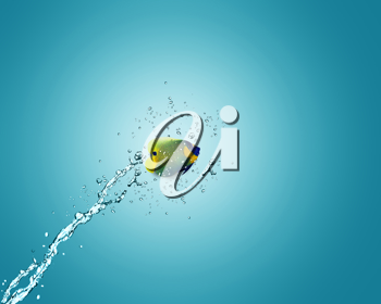 Royalty Free Photo of an Angelfish Jumping Out of the Water