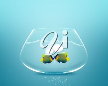 Royalty Free Photo of a Angelfish Inside a Fish Bowl With a Concept of The Fish Having a Conversation With Talk Bubbles