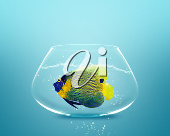 Royalty Free Photo of a Angelfish in a Small Fishbowl