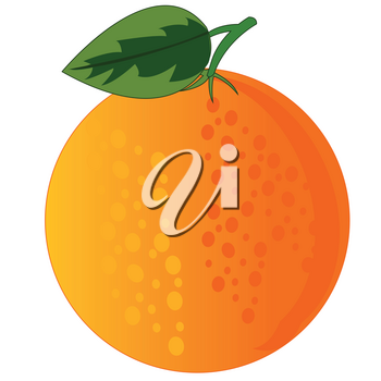 Vector illustration of the ripe fruit orange