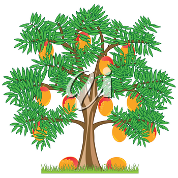 Tree with ripe fruit mango on white background is insulated