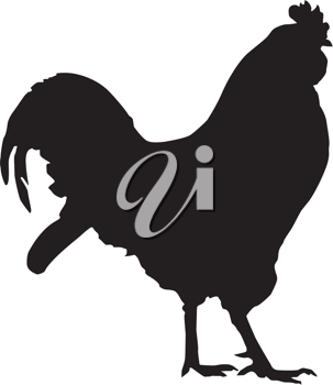 Vector silhouette of a rooster