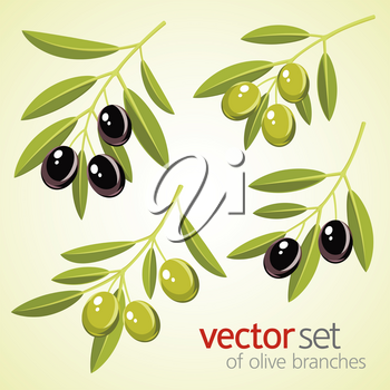 Vector set of olive branches. Green and black olives