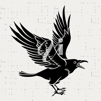 Vector silhouette of a flying black raven on grunge background