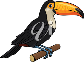 Vector illustration of a Toucan, isolated on white