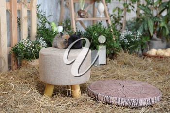Two little rabbits are sitting on a round soft stool on the background of Easter decorations in a photo studio.