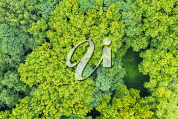 Aerial of green trees with crescent interval field, aerial in Suzhou, China.
