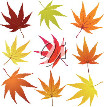Set of of autumn  maples leaves. Vector illustration.