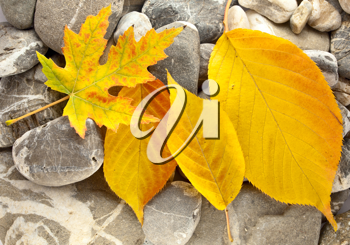 Royalty Free Photo of Fallen Leaves on Stone