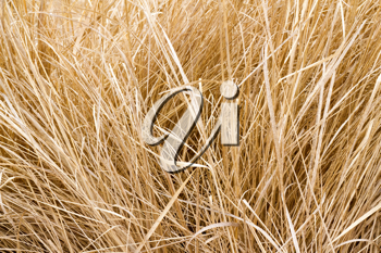 Royalty Free Photo of Dry Grass