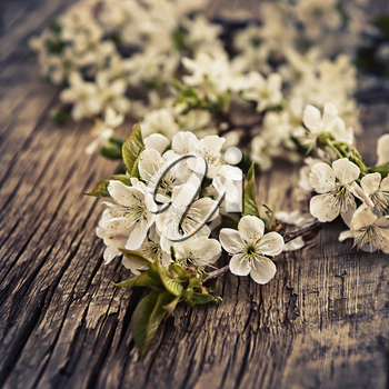 branch of the cherry blossoms closeup on wooden background