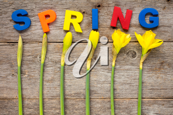Letters spelling word SPRING with daffodil flowers on wooden background
