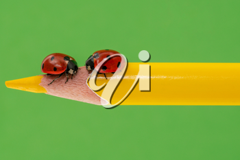 Couple of ladybugs on a yellow pencil over green background
