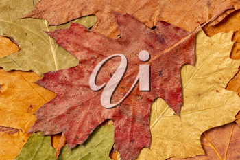 Dry autumn leaves, pastel colors.Flat lay, close-up.