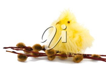 Easter chicken and willow on the white background