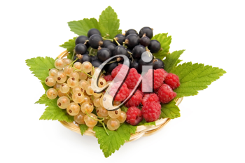 White and Black currant, red raspberry, currant, green leaves in a wicker plate isolated on a white background