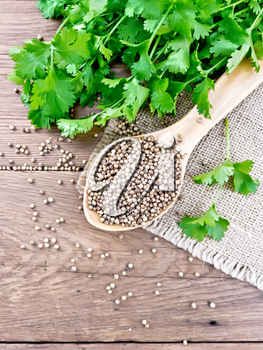 Coriander seeds in a spoon on burlap, green fresh cilantro on background of an old wooden board from above