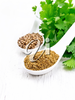 Coriander seeds and ground in two spoons, fresh cilantro on a white wooden board background