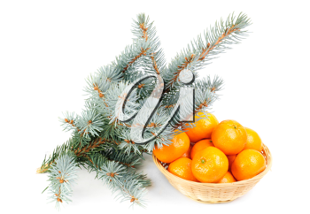 Royalty Free Photo of Pine Needles and a Basket of Oranges