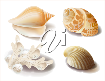 Royalty Free Clipart Image of a Set of Seashells