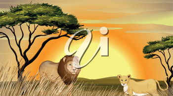 illustration of a tiger and lion in jungle