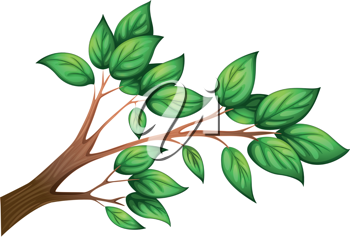 Illustration of a branch of a tree with leaves on a white background