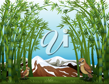 Illustration of a bamboo forest view