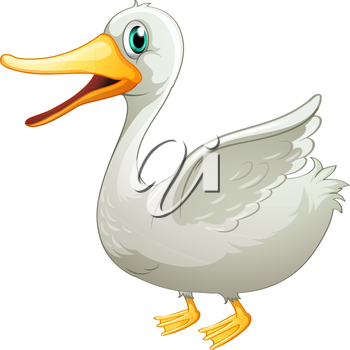 Illustration of a white fat duck on a white background