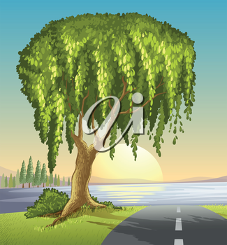 Illustration of a big tree at the road