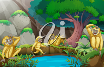 Four gibbons in the forest illustration