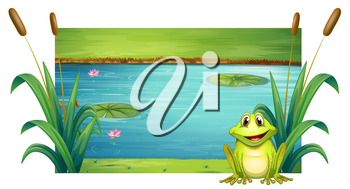 Green frog sitting by the river illustration