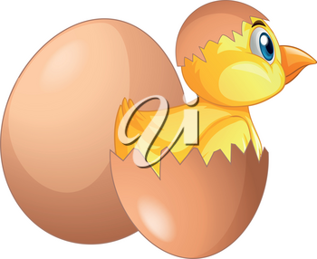 Chick comes out of egg illustration