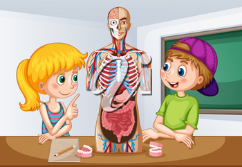 Students learning about human anatomy illustration