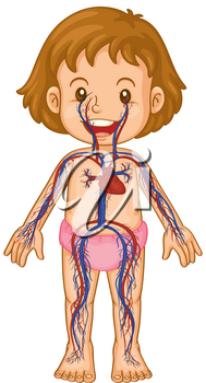 Blood systems in little girl body illustration