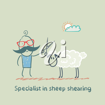 Specialist sheep shearing