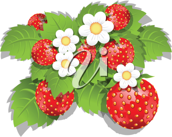 Royalty Free Clipart Image of a Strawberry Plant