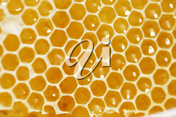 Macro shot of a Honeycomb with liquid honey
