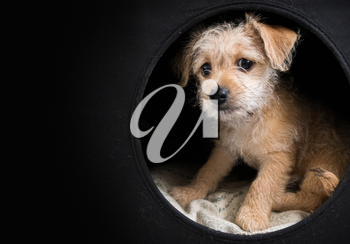 Cute brown puppy in a dark box with, copy space