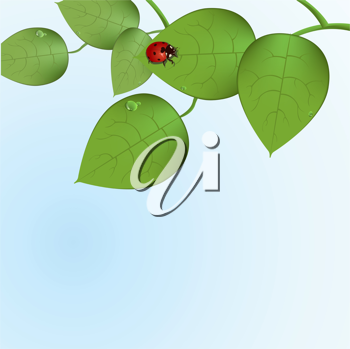 Royalty Free Clipart Image of a Ladybug on Leaves