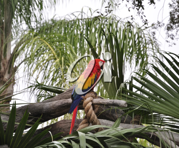 Royalty Free Photo of a Parrot Sitting on a Branch