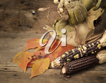 Royalty Free Photo of Indian Corn