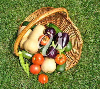 fresh organic vegetables in a basket on a grass