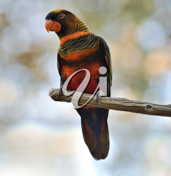 Colorful Parrot Perching On A Branch