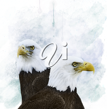 Portrait Of  Bald Eagles.Digital Painting.