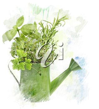Watercolor Digital Painting Of fresh Herbs In Watering Can